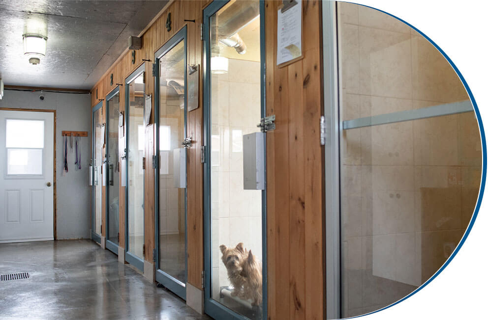 Pension canine court et long terme